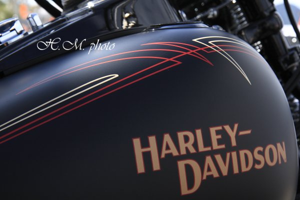 2008_ハーレーフェスティバル2_03.jpg