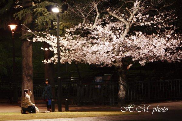 2009_原爆公園の夜桜_02.jpg