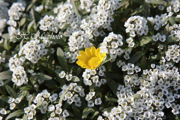 2009_異彩_01.jpg