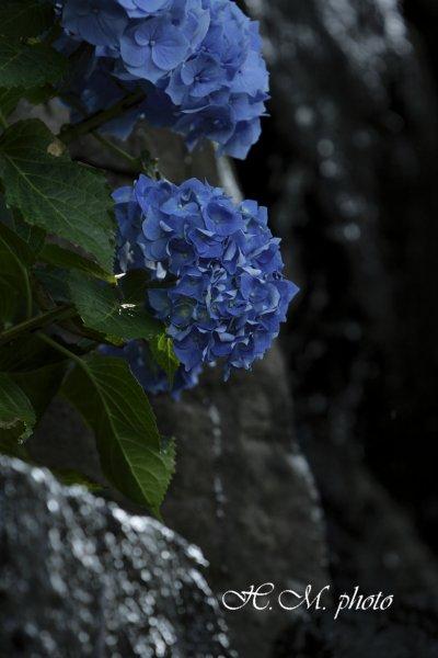 2009_長崎あじさいまつり4_01.jpg