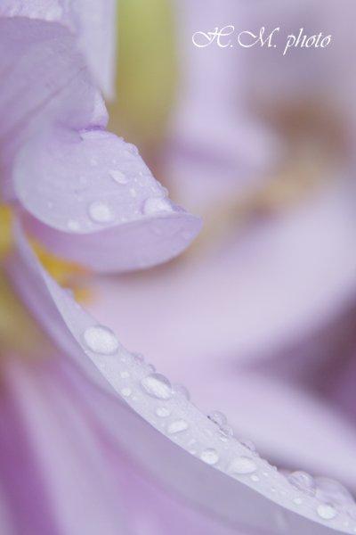 2009_長崎県亜熱帯植物園3_02.jpg