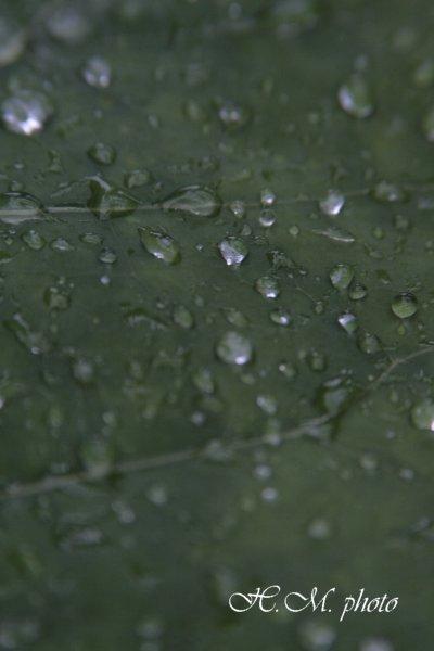 2009_長崎県亜熱帯植物園3_05.jpg