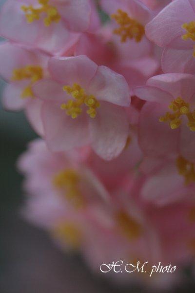 2009_長崎県亜熱帯植物園_06.jpg