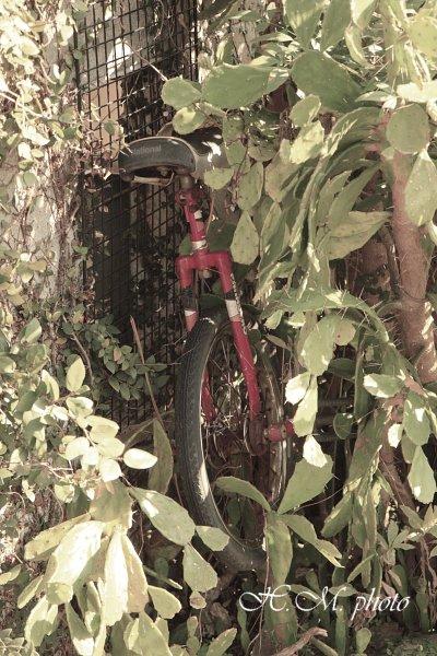 2010_家庭菜園_01.jpg