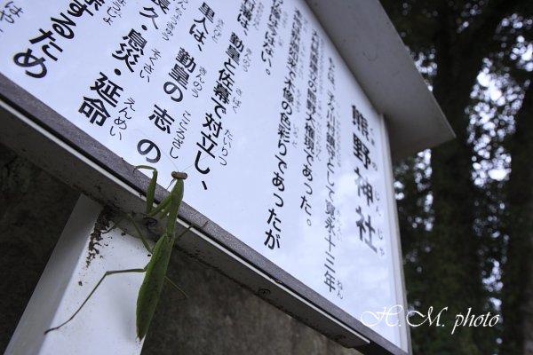 2010_熊野神社_01.jpg