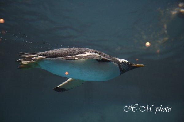 2010_長崎ペンギン水族館_06.jpg