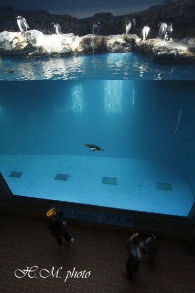 2010_長崎ペンギン水族館_07.jpg