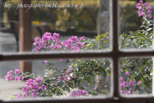 2012_グラバー園の花_02.jpg