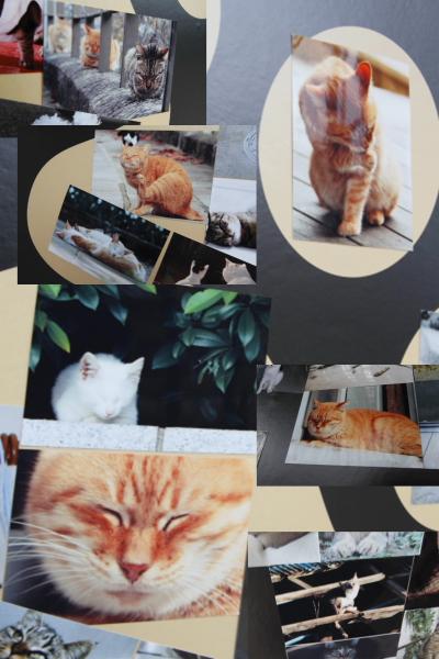 2012_岩合光昭 ねこ写真展_05.jpg