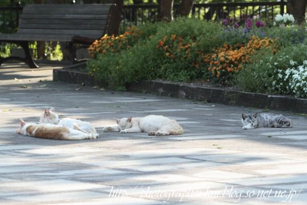 2012_猫枕_01.jpg