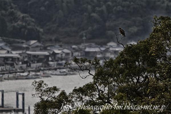 2012_飯香の浦ー茂木の海岸線_01.jpg